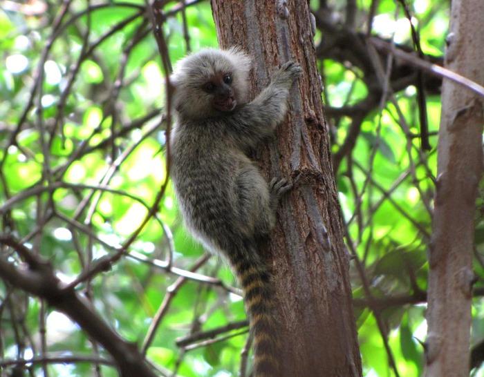 Mais um macaco encontrado morto no DF