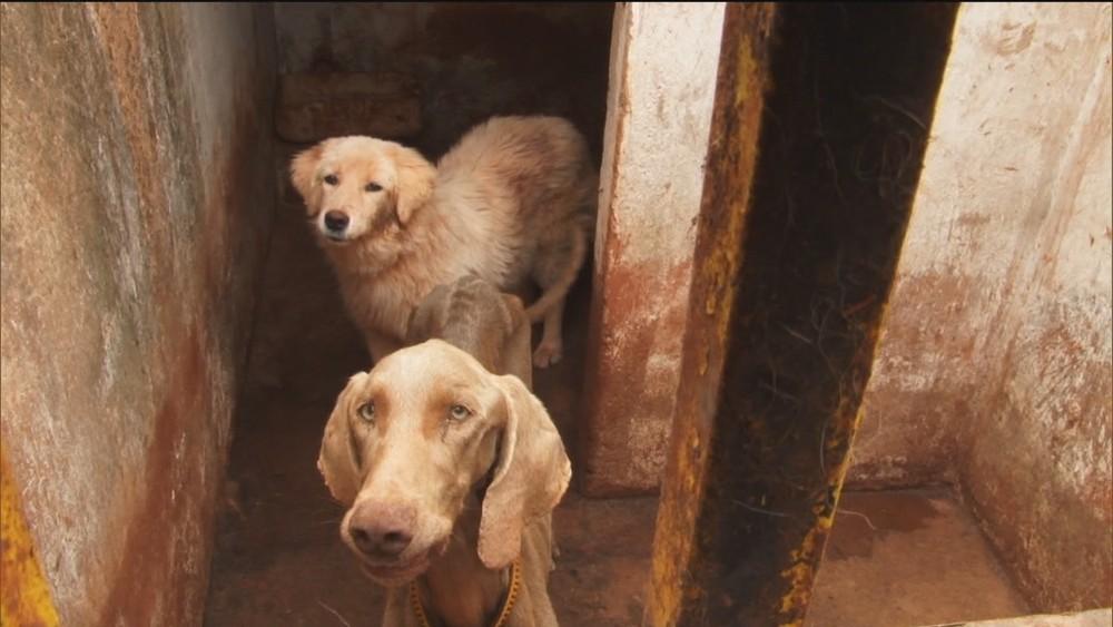 Polícia Ambiental do DF recebe até 7 denúncias de maus-tratos contra animais por dia