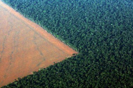 Brasil tem pouco a comemorar na semana do Dia Mundial do Meio Ambiente