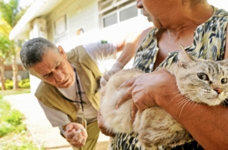 Campanha de vacinação antirrábica começa neste sábado (31)