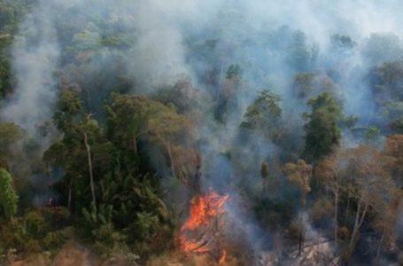 Número de focos de incêndios na Amazônia chegou a quase 31 mil em agosto