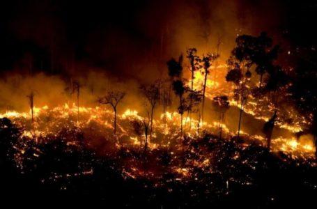 Governo do Pará aciona o governo federal para ajudar a combater incêndios no Estado