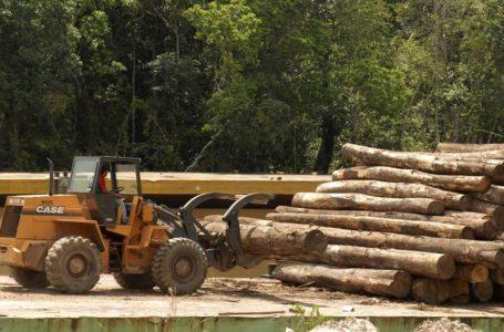 OPORTUNIDADE OU AMEAÇA | Governo estuda liberar exportação de madeira da Amazônia