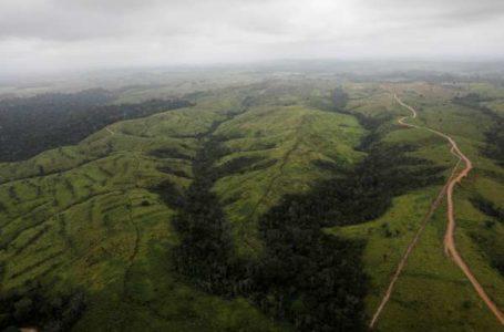AUMENTOU | Desmatamento da Amazônia sobe 29,5% e é o maior desde 2008
