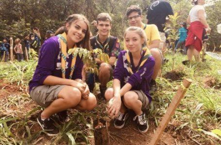 QUASE 4 MIL MUDAS | Parques do DF recebem mutirão de plantio de mudas nativas do Cerrado