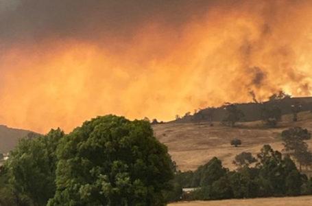 DESEQUILÍBRIO | O impacto ambiental dos incêndios na Austrália pelo mundo