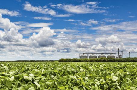 IMPACTO AMBIENTAL | 'Agricultura brasileira não é vilã das mudanças climáticas ou do meio ambiente', diz ministra da Agricultura