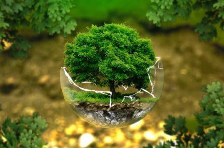 ATÉ DIA 30 DE DEZEMBRO | GDF estende prazo de autorizações e licenças ambientais