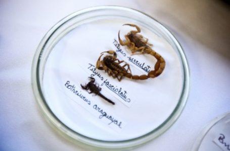 Limpeza adequada ainda é a melhor prevenção contra escorpiões