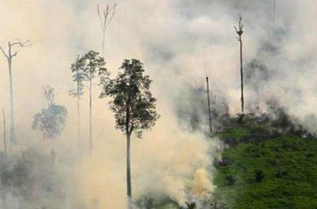 TRISTE REALIDADE   Em um ano, desmatamento cresceu 29% na Amazônia