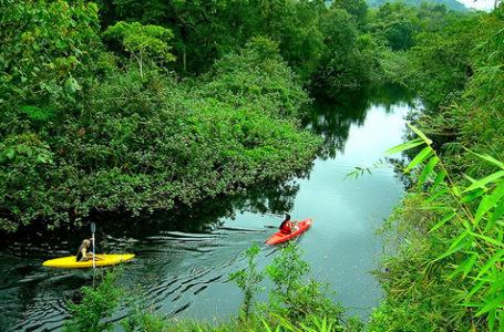 POLÍTICA AMBIENTAL | Conama derruba regras que garantiam proteção a manguezais e restingas