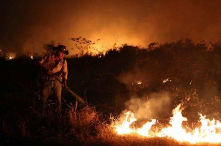 COM ALTA DE 82% | Queimadas no Pantanal são as maiores em 23 anos