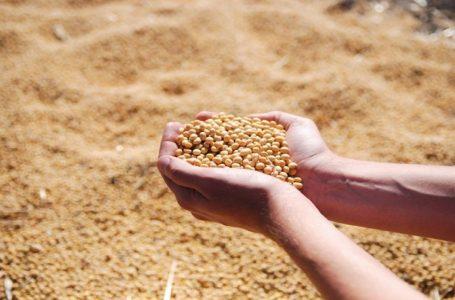 EXPECTATIVA DE RECORDE | Goiás deve produzir quase 28 milhões de toneladas de grãos