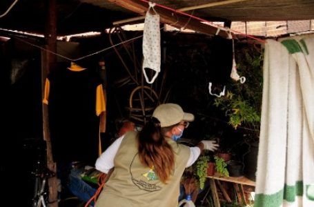 76,2% A MENOS | DF registra quedas consecutivas nos casos de dengue