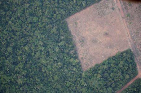 DEVASTAÇÃO ACELERADA | Amazônia registra 2º ano com maior desmatamento desde 2015