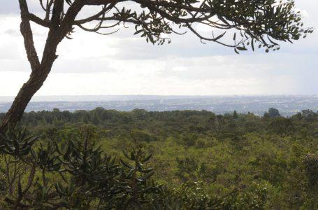 RADIS CERRADO | Aplicativo vai permitir que produtores do DF ajudem no monitoramento e gestão ambiental da região